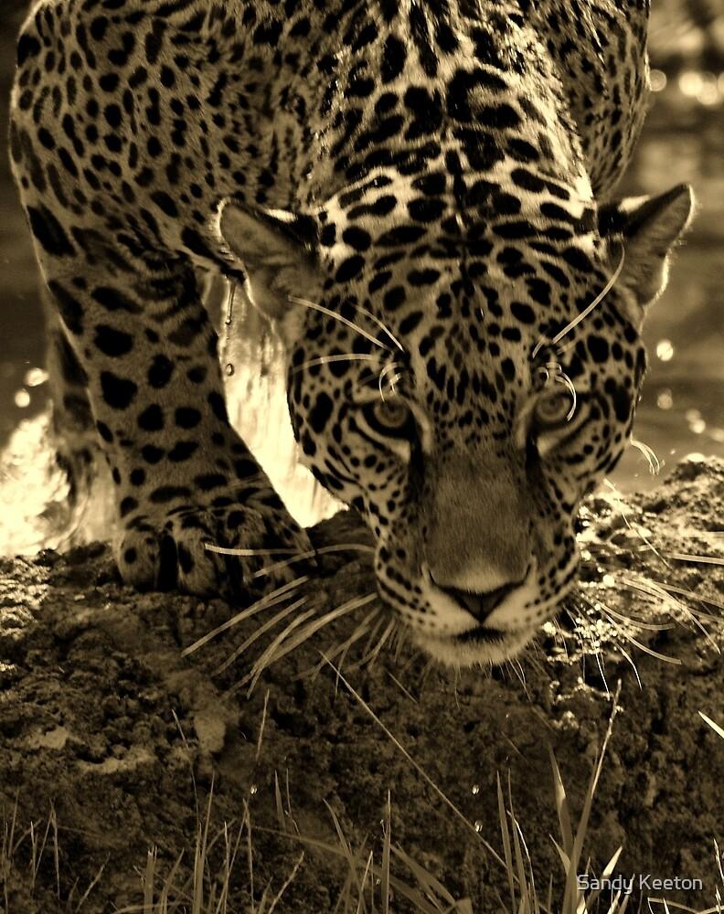 Jaguar in Sepia by Sandy Keeton