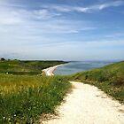 The path to the beach by annalisa bianchetti