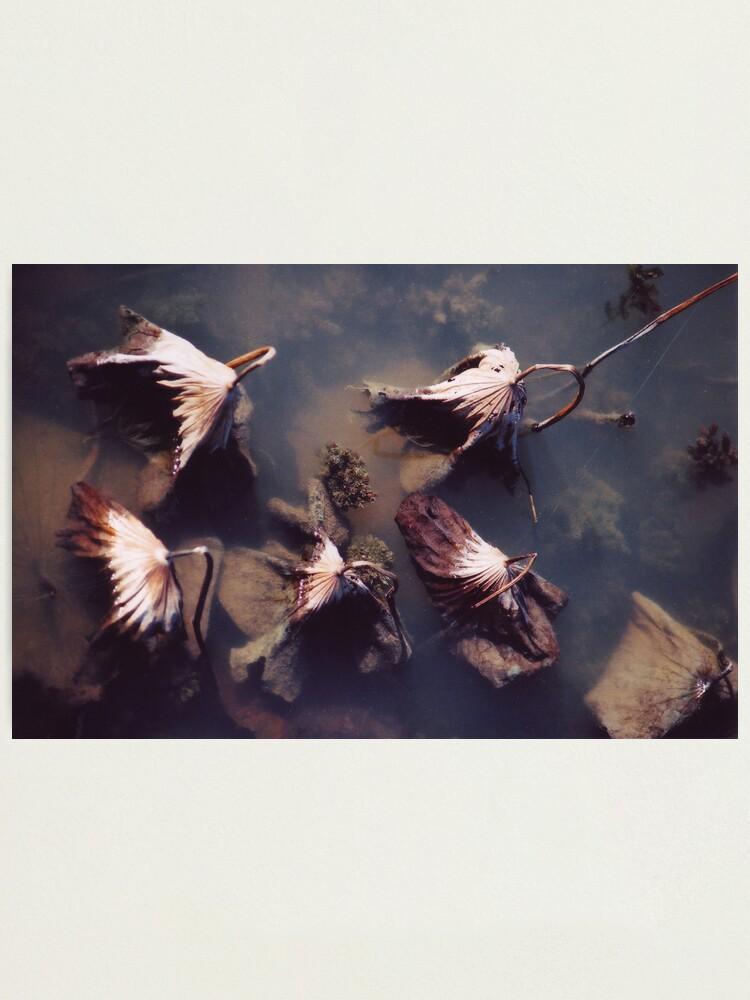 Alternate view of River Lotus Photographic Print
