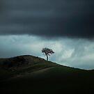 Lonescape by Evelina Kremsdorf