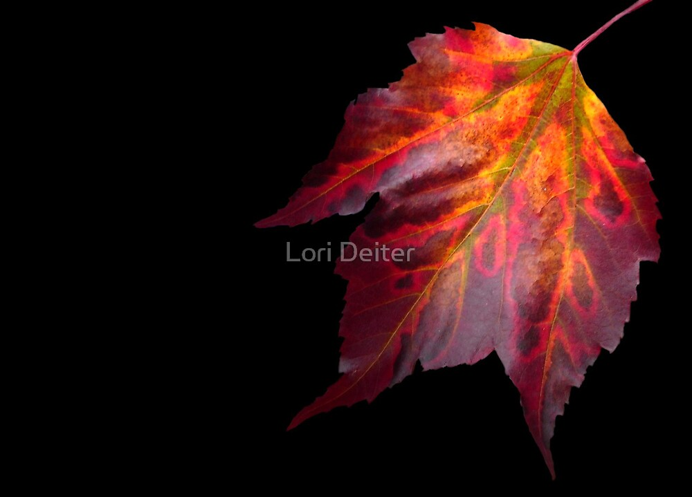 MAPLE HUES by Lori Deiter
