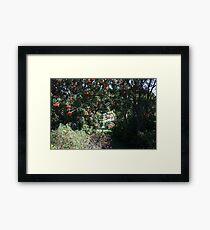 Mountain Ash Framed Print