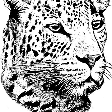 Big Five - Leopard by shadowmachina