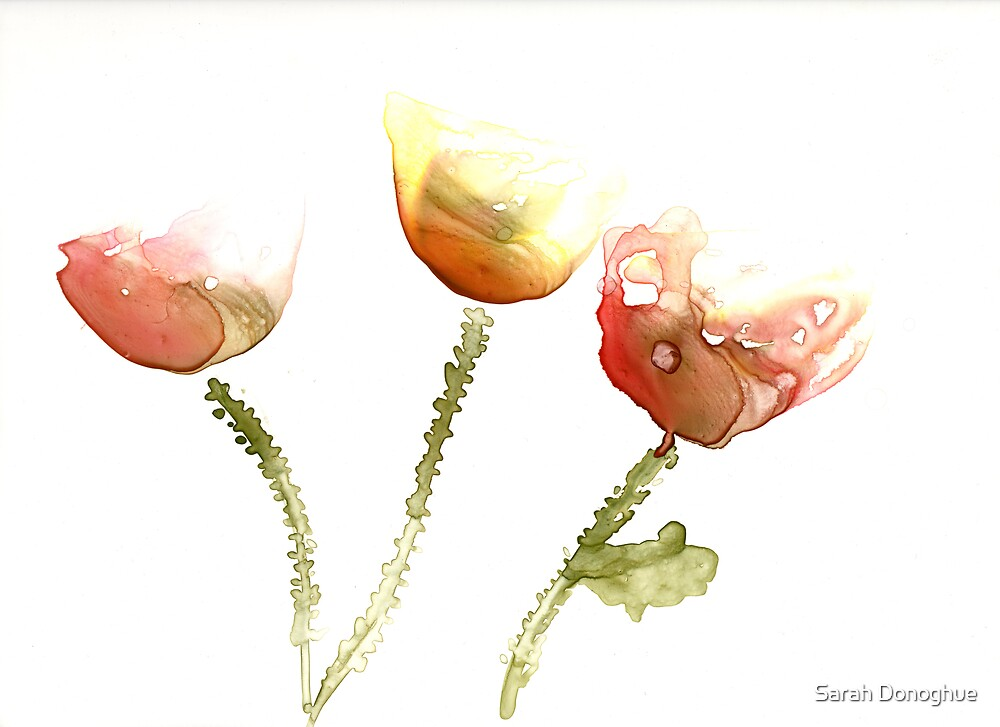 Poppies by Sarah Donoghue