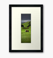 Hereford bull - Gippsland Framed Print