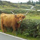 Breakfast For A Dartmoor Cow by lezvee