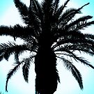 palm tree by krbraate