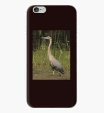 Chippewa Flowage Great Blue Heron iPhone Case