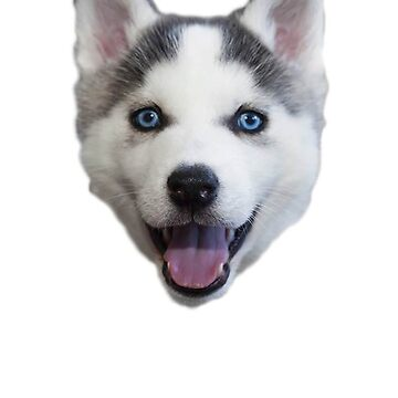Muy feliz Puppy Husky de KimzeyandAlex