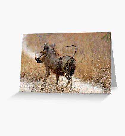 ATTITUDES OF THE WARTHOG  ! -( Phacochoerus aethiopicus) Greeting Card