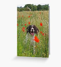 The Colourful Life of a Springer Greeting Card