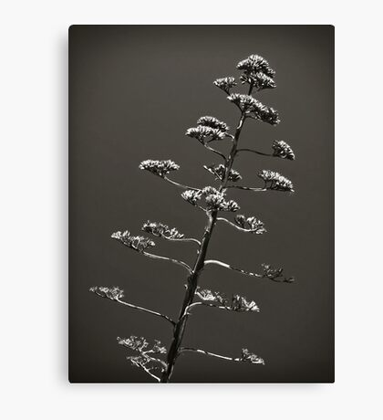 Praying. Canvas Print