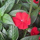 Little flower by pinkster