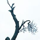 Bird on a tree by Roz McQuillan