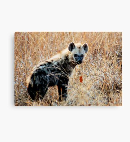 THE SPOTTED HYAENA - Powerful and treacherous... Canvas Print