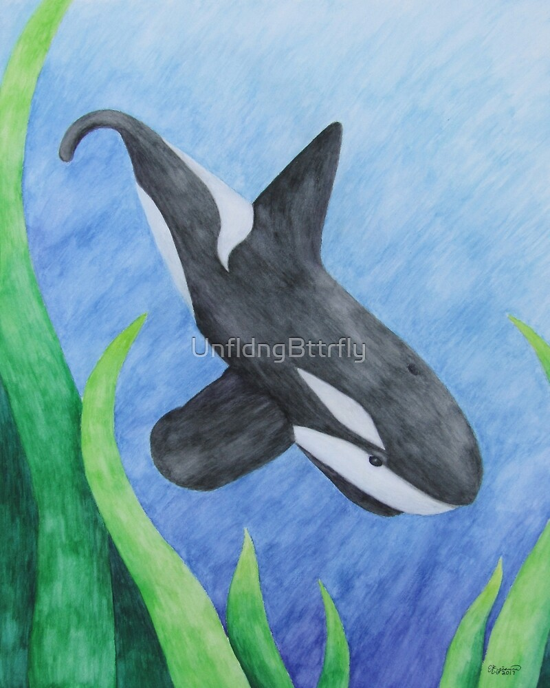 Orca - Watercolor Pencil Aquatic Totem Animal #6 by UnfldngBttrfly