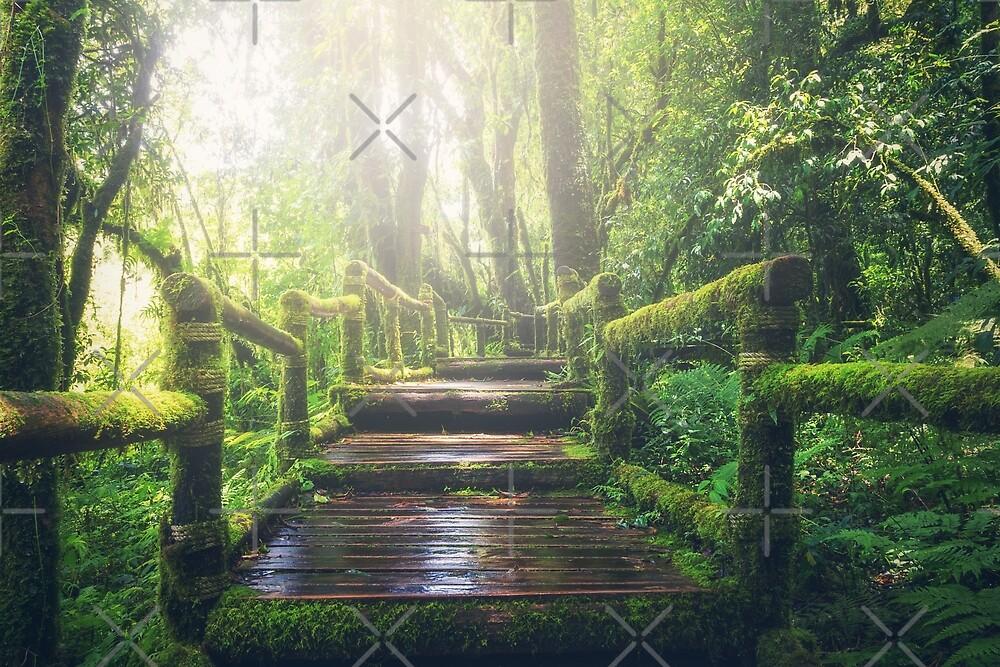 Jungle Forest walking bridge track  by onjcdesign