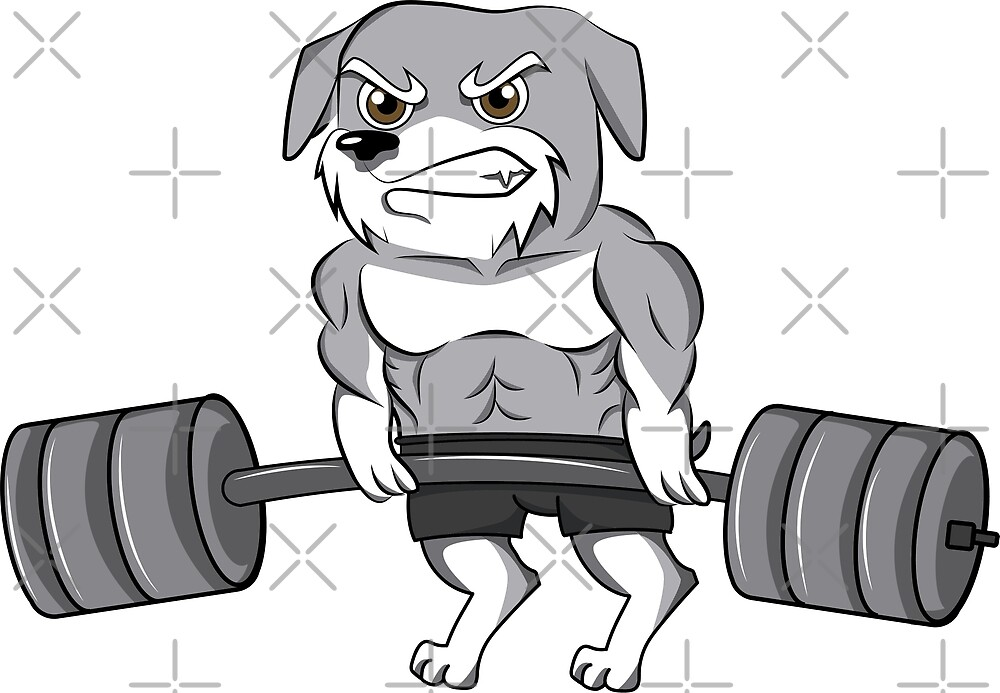 Funny Schnauzer Weightlifting Bodybuilding by ilovepaws
