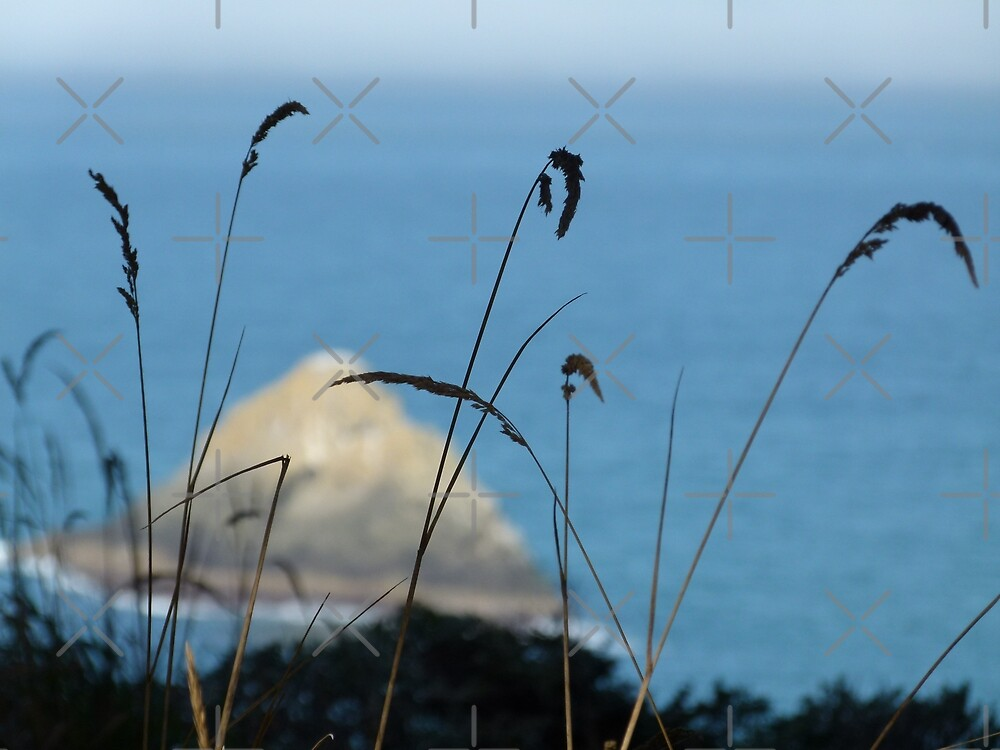 Sea Through Grass by Kimberly Miller