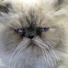 Ho Bo-- What A Frown!!! by Linda Miller Gesualdo