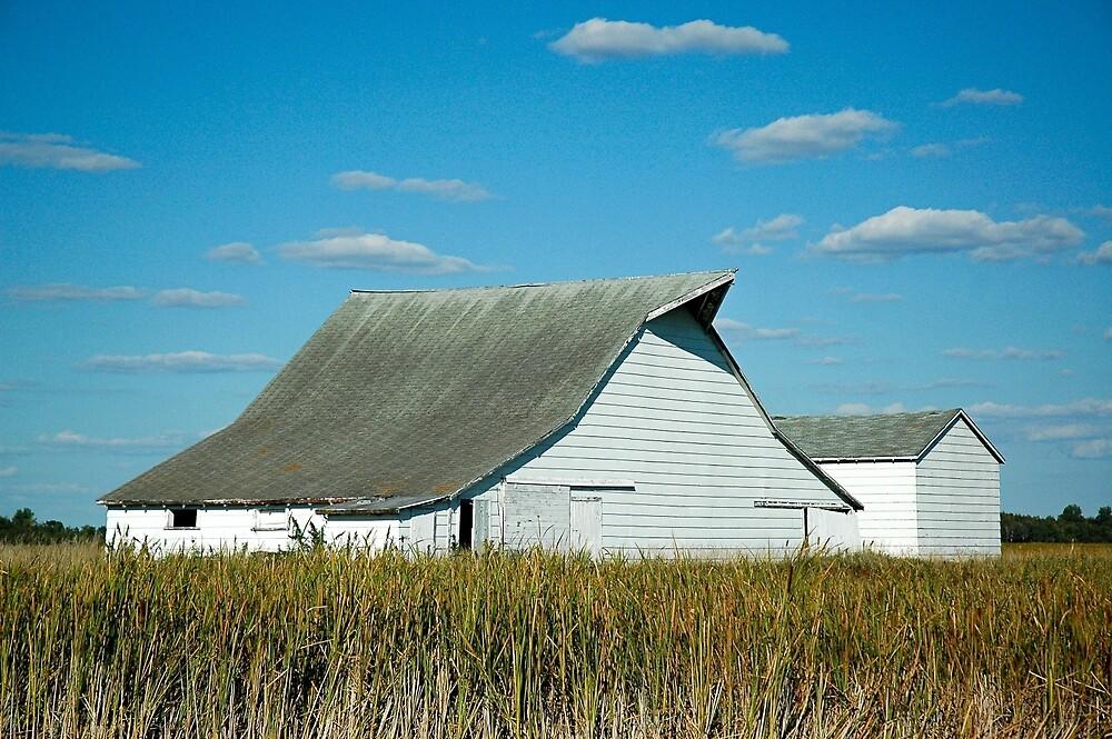 Abandoned White Barn  by pinkdream