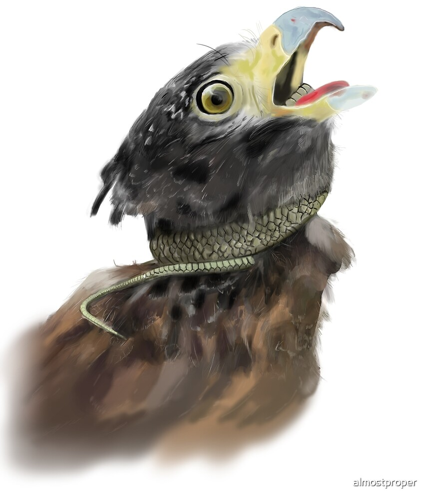 Peregrine Falcon  by almostproper