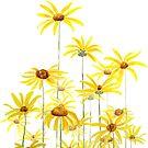 yellow Jerusalem artichoke flower watercolor  by ColorandColor