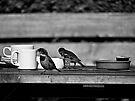Sparrows at Tea-Time by Ryan Davison Crisp