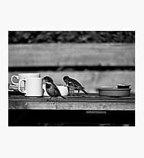 Sparrows at Tea-Time Photographic Print