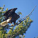 Eagle Eye by Jane Best