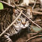 Hidden Cat Young Feral Tom by Chriss Pagani