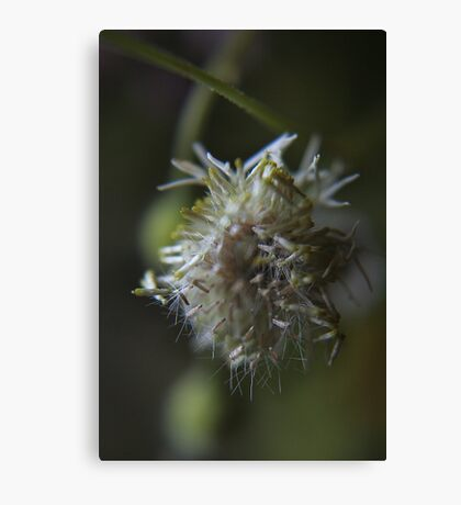 Chaos (from wild flowers collection)  Canvas Print