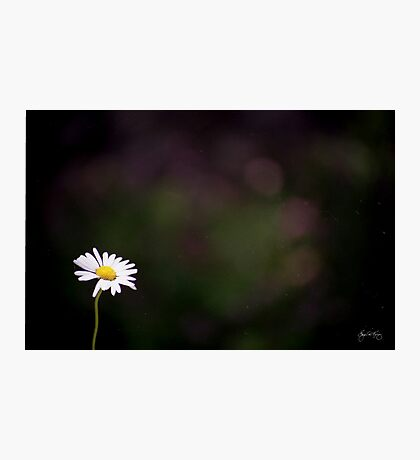 The Lone Daisy Photographic Print