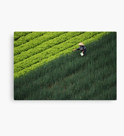 Working the field Canvas Print