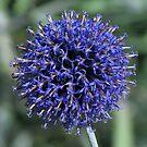 Fabtastic Flowers  by Sharon Perrett