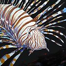 Lion Fish by Mike  Segura