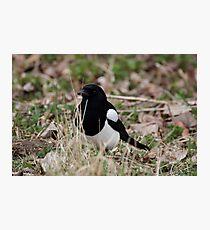 Summer Magpie Photographic Print