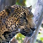 Leopard  by George Lenz