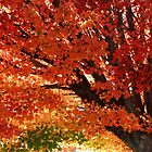 Autumnal Colour by DianaC