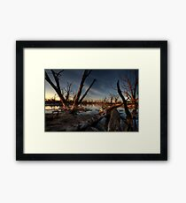 Red Gum Grave Yard Framed Print