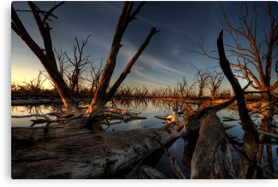 Red Gum Grave Yard by Dave  Hartley