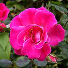 Pink Flower One by Yvonne Carsley