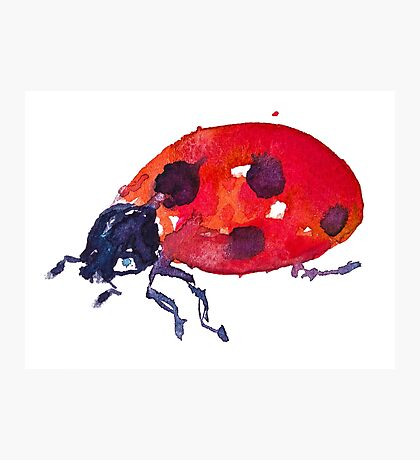 BAANTAL / Pollinate / Ladybird Photographic Print