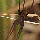 Very Large Spider by Robert Abraham