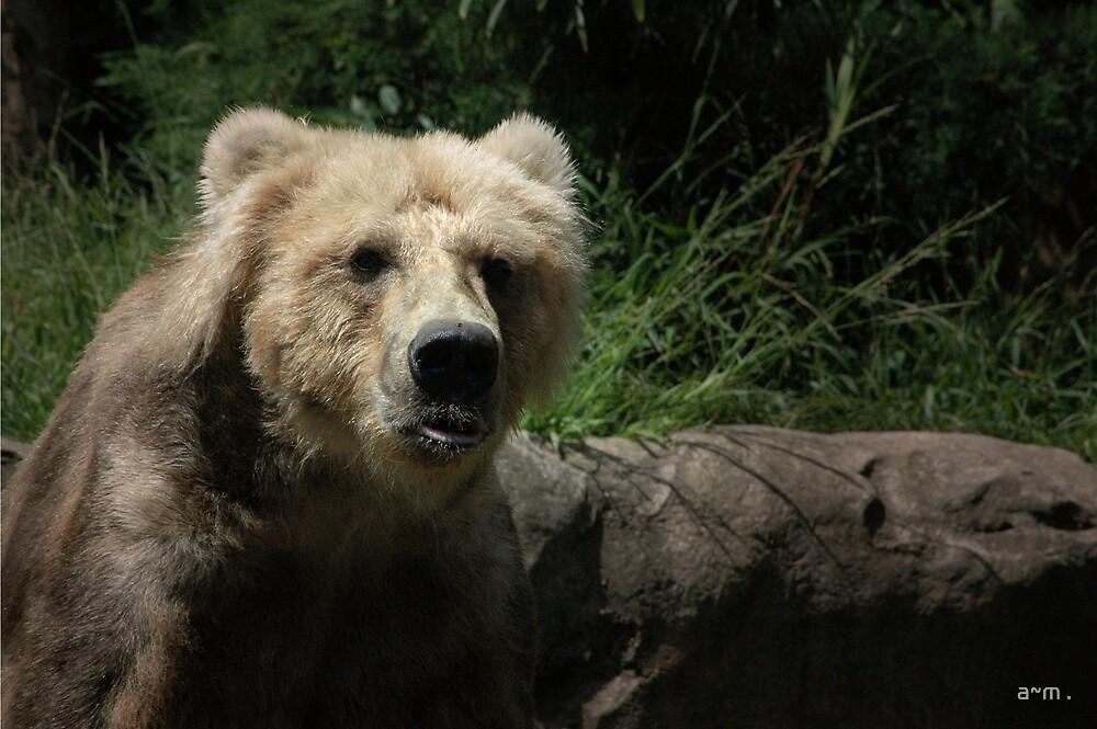 ~The Kodiac Bear~ by a~m .