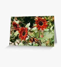 Red Sunflower Trio of 2018 Greeting Card