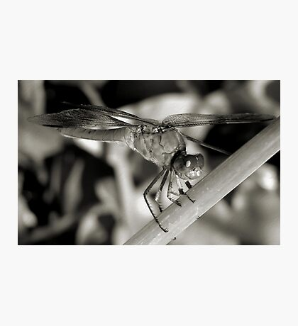 *Ready For Take Off   2* Photographic Print