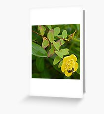 A Busy Wasp in Etal Greeting Card