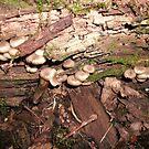 Escargot  or mushrooms..?? by linmarie