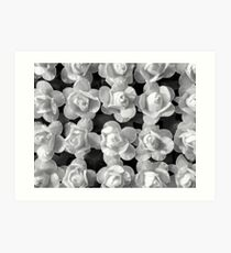 Papery Roses by Jenny Meehan Art Print